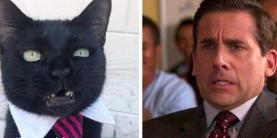 Cat imitating Steve Carrell