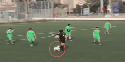 dog on a football court
