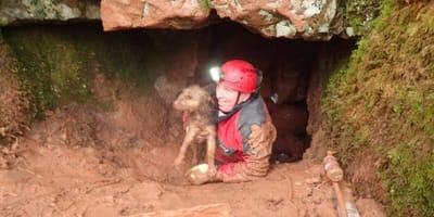 Rescue helping a dog in the mud