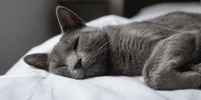 Everything you need to know about lung cancer in cats