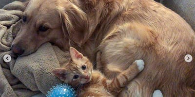 Gatto che abbraccia un cane distesi su divano