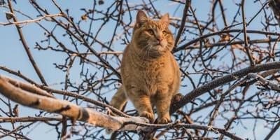 Katze sitzt auf Baum