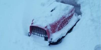 Transportín de gato enterrado en la nieve