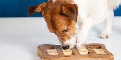Hund spiel Holzspiel