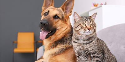 Kot czy pies? Jakie zwierzę wybrać?