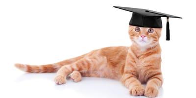 Czy koty są inteligentne? Nawet bardzo!