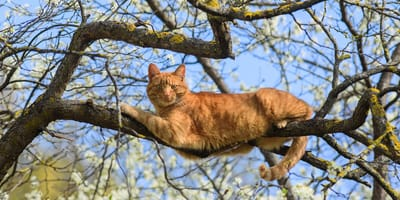 kot ma drzewie
