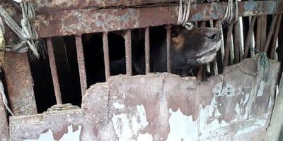 Uratowano zwierzęta żyjące w tragicznych warunkach w gospodarstwie w Zawadzie. Odchody, łańcuchy, sterta śmieci.