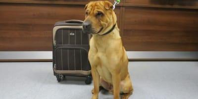 Perro abandonado con su maleta