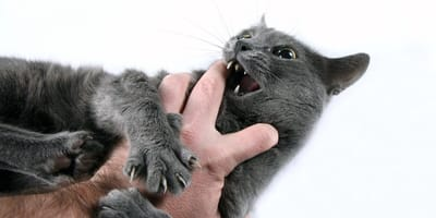 Ugryzienie przez kota – co zrobić, gdy pojawi się opuchlizna?