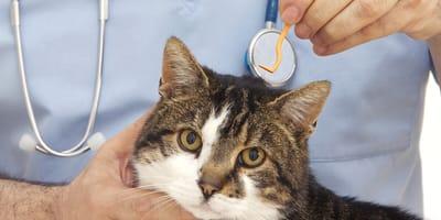 Jak bezpiecznie usunąć kleszcz u kota?