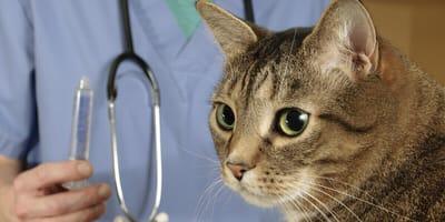 Krankenversicherung für die Katze: Die wichtigsten Fragen und Antworten