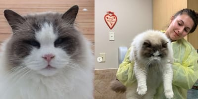 A family abandoned their cat on the streets... but the neighbours stepped in and gave him a home!
