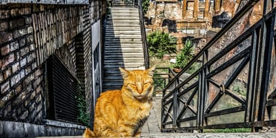 Ginger cat in the street