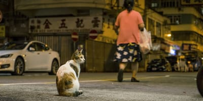 Campaigners want new laws to protect cats on the road