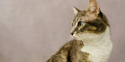 Mamma gatta con occhi verdi di profilo