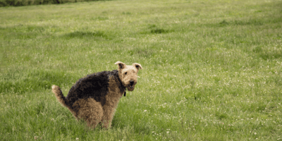 Five home remedies for dog constipation