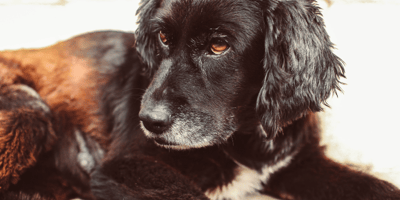 Home remedies for blood in a dog's stool