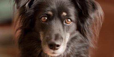 I rimedi naturali per l'infezione all'occhio del cane