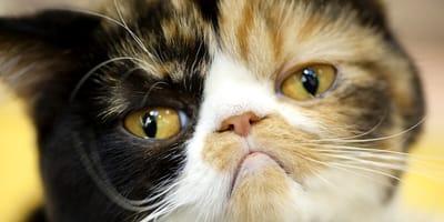 Fünf Gründe, warum deine Katze dich nicht liebt