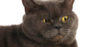 Czego nie lubią koty? Sprawdź, czy tego nie robisz!