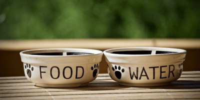 Top tips on how to feed a pregnant dog