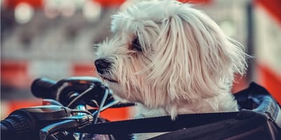 Jak wybrać odpowiedni koszyk rowerowy dla psa?