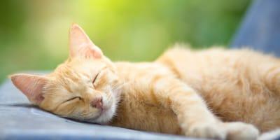 Dlaczego kot chrapie? Poznaj możliwe przyczyny
