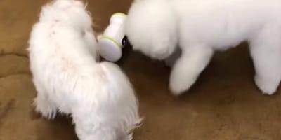 Arriva un robot che tiene in forma il cane