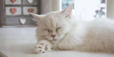 Missing Edmonton cat does a 'Paris, Texas' in Edmonton, Alberta