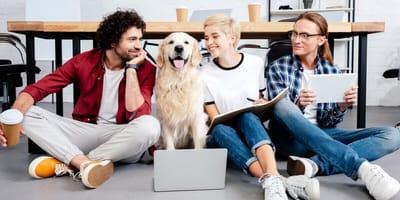 Hund mit drei fröhlichen Menschen im Büro