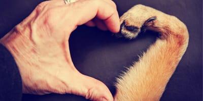 Okaż psu miłość nie tylko w walentynki!