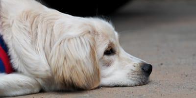 Fünf Dinge, die Hunde an Menschen gar nicht mögen