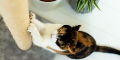 Katzenkratzbaum: Fragen und Antworten zu einem Bestseller