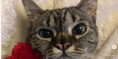 Foto di gatta con due nasi