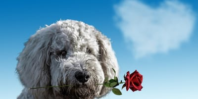 Valentine's Day Is For Lovers of Pets of course!