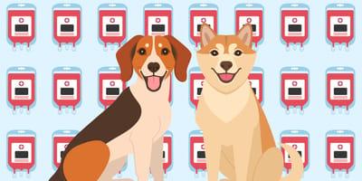 Comic Hunde vor Blutproben