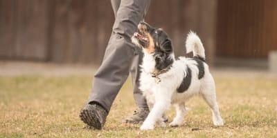 """Hundeführerschein: Alles Wissenswerte zum """"Lappen für Hunde"""""""