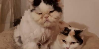Katzenpärchen Joschi und Püppi