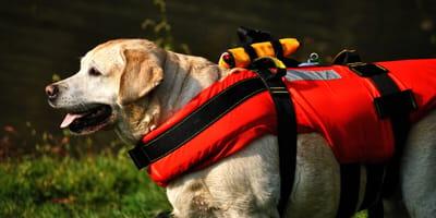 Rettungshund