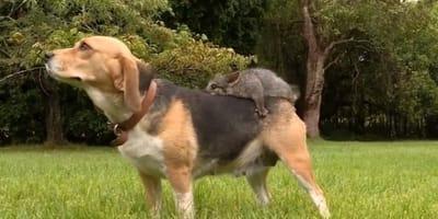 Puppy with broken heart