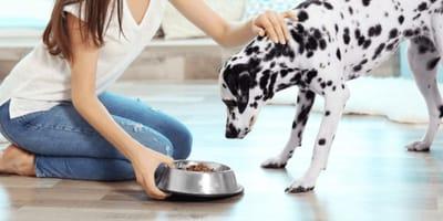 sucha karma dla psa