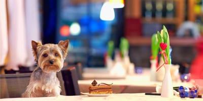 Czy psy mogą wchodzić do restauracji?