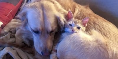 Stray cat finds canine best friend