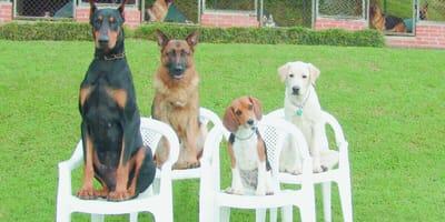 Das bellende Klassenzimmer: Was kostet eine Hundeschule?