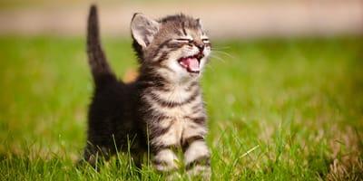 czkawka u małego kotka