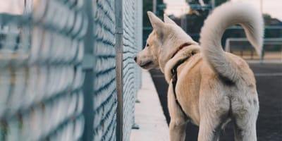 rabo perro