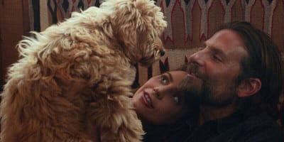 Psi Oskar dla Bradley'a Coopera!