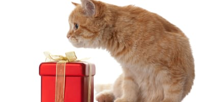 Kot z prezentem