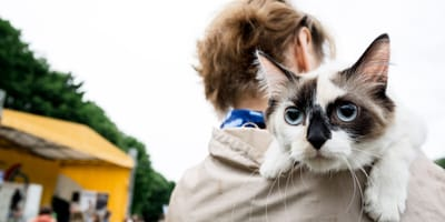 Co zrobić ze znalezionym kotem? Podpowiadamy!
